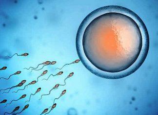 Quan hệ như thế nào thì có thai dễ dàng nhất?
