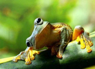 Mơ-thấy-con-ếch-đánh-con-gì