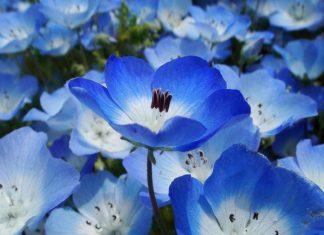 Mơ thấy màu xanh là điềm báo lành hay dữ?