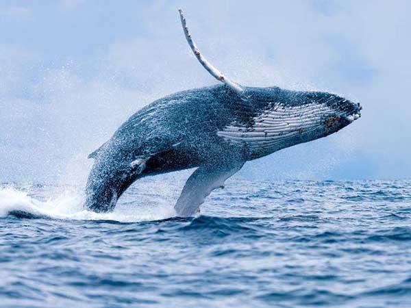 Ý nghĩa của giấc mơ thấy cá voi là gì