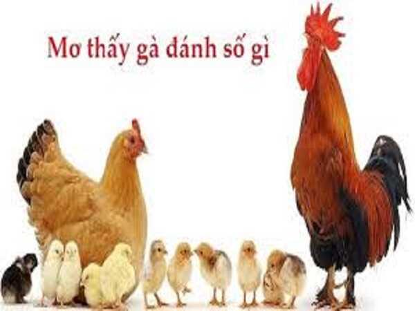 Mơ thấy con gà điềm lành hay giữ