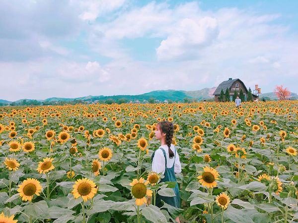 Mơ thấy cánh đồng hoa hướng dươngđánh con gì?