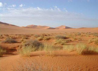 Mơ thấy sa mạc đánh con gì? Là điềm báo lành hay dữ