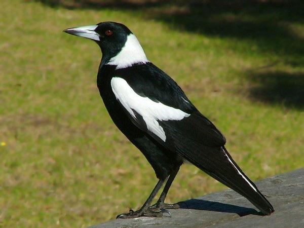 Nằm mơ thấy chim có ý nghĩa gì trong cuộc sống