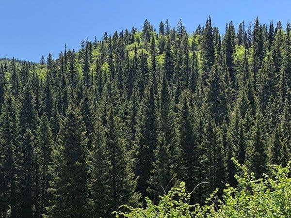 Mơ thấy rừng cây điềm báo lành hay dữ?