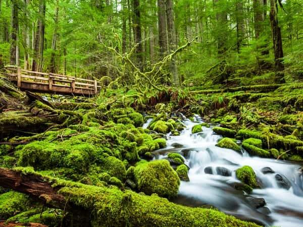 Mơ thấy rừng cây đánh con gì chính xác?