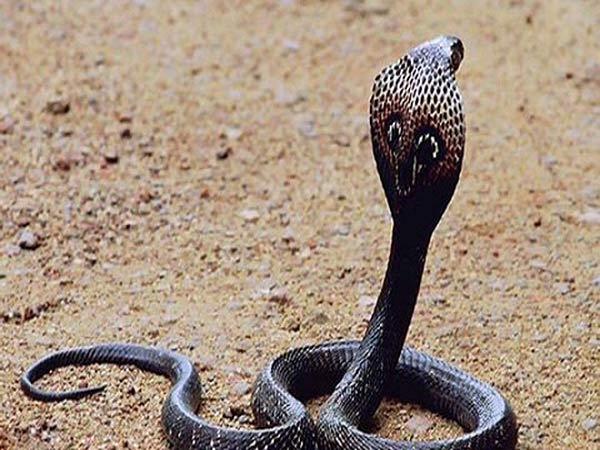 Đi đường gặp rắn điềm báo gì? Lành hay dữ cần làm gì để tránh gặp họa