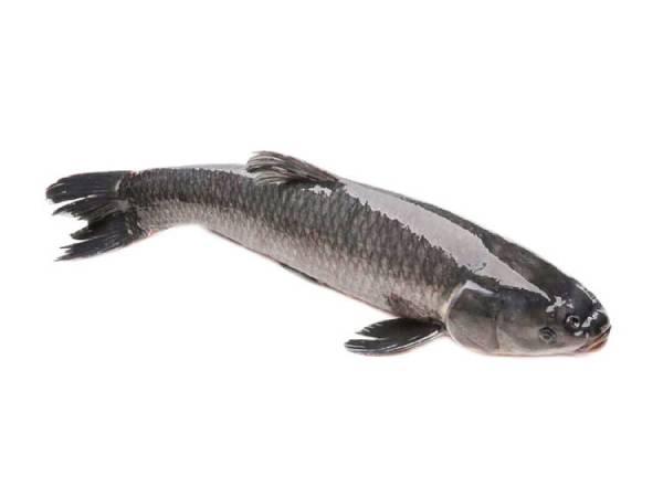 Mơ thấy cá lóc